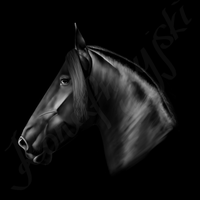 Friesian Portrait. by konikfryzyjski