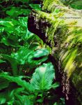 Skunk Cabbage by GlassHouse-1