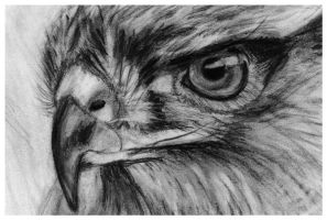 eagle sketch by szog88