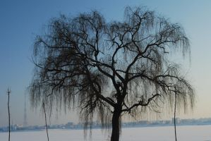 tree 01 by deepest-stock