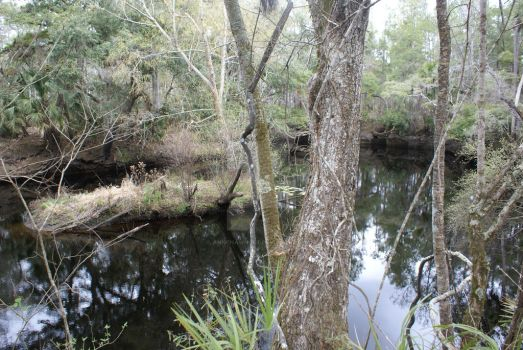 Aucilla Sinkhole with Island by annehawholt