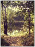 Pond in the woods by laluna19