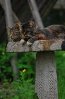 Sleeping in the Birdbath by coffeenoir