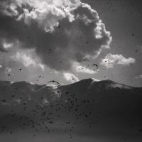 Fly Me Away by nool2i