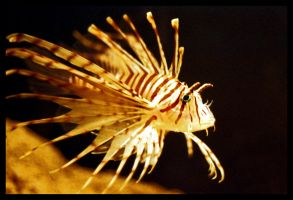 Spiky Lion Fish by FromtheGalaxy
