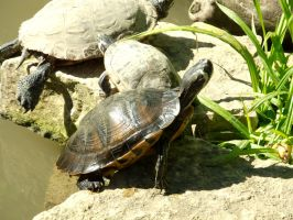 turtle, animal by basquiat79