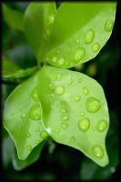 green drops by crichton380