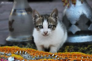 Kitten in Hurghada by ziksan