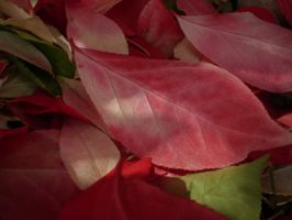 Soft Pink Leaf by Pentacle5