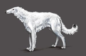 snowydog type B, sketch by branka42