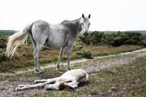 Mare and Foal in the Wildernes by lorni3