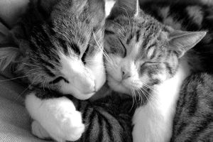 Cats hugging by coldplayeuze