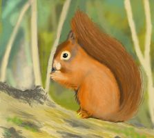 Red Squirrel by Vynnx