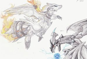Reshiram and Zekrom by Caedus6685