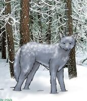 Random Wolf- Colored by trisis