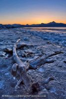 Frozen Driftwood by MSimpsonPhotos