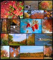 Collage of Autumn by CecilyAndreuArtwork