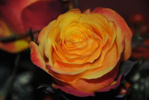The rose by garbo009