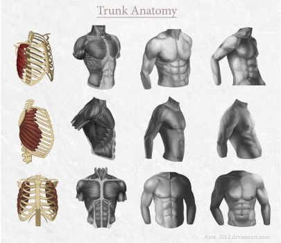 Trunk Anatomy by Azot2017