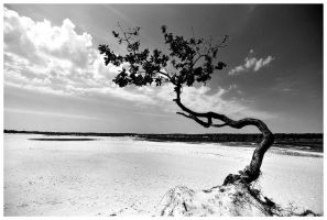 Lonely tree by BenTich