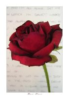rose prose by bwaa