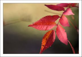 Autumn Leaves 1 by kucingitem