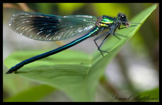 The Dragonfly by stainless2009
