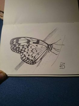 A rice paper butterfly  by anne-summer