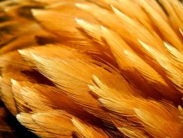 feather6 by 08brooky80