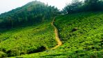 The Green Path 1920x1080 by YadavThyagaraj