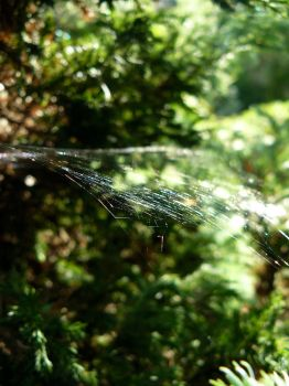 Spider's web by my-place