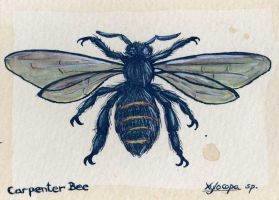 Carpenter Bee by feynico