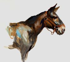 Mule Study by grobles63