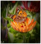 butterfly by tina1138