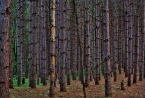 The Enchanted Forest by ZachSpradlin