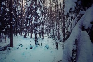 winter forest by paracats