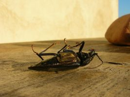 An insect on a table by JaBoJa