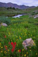 Summer Field of Colorado by yenom
