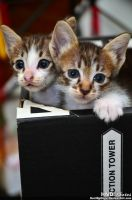 A Pair of Kittens by HariNgDuga