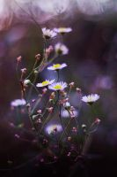 White Flowers vol.2 by Justine1985