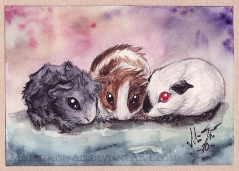 Three Little Guinea Pigs by Sysirauta