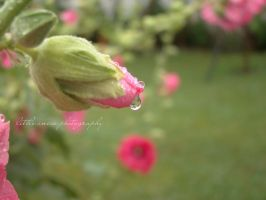 crying flower by littleancsi