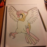Pidgeotto Drawing by Krayzieee