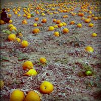 pumpkin fields forever by fraeuleinamok