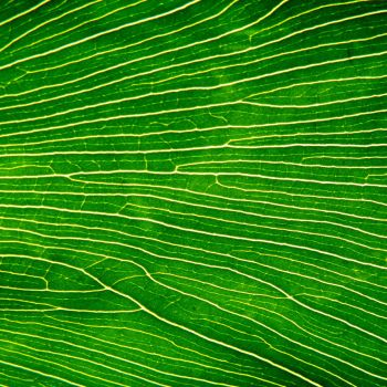 Striped Leaf 01 by s-kmp