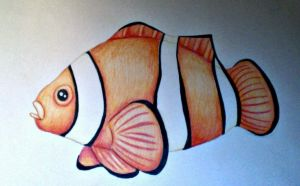 Clown Fish Drawing by SarahStar123