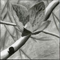 Leaves - Graphite by lorienelf