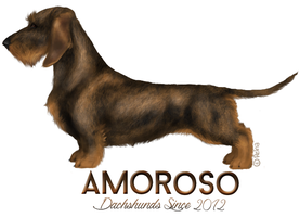 Amor Wirehaired Dachshund by reinafawn