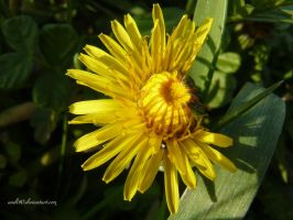 sweet little yellow by andi40
