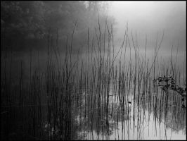 Early Morning Fog and Reeds by bamako